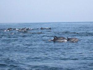 Indus Dolphin Boat Safari