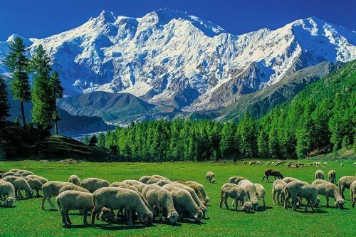 Fairymeadow Pakistan